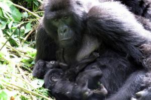 Gorilla Naming Ceremony Tour Packages