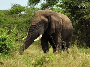 Akagera National Park safaris